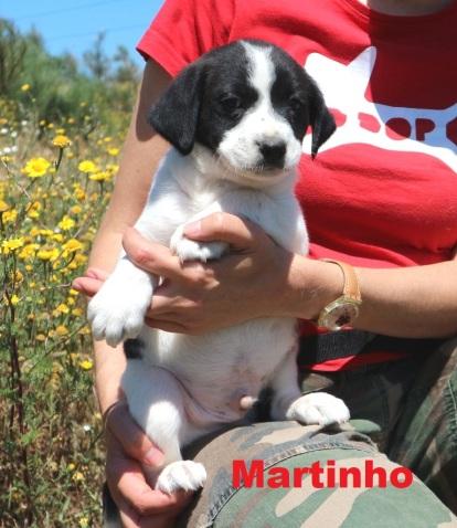 Martinho (1)