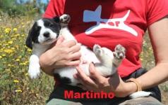 Martinho (3)