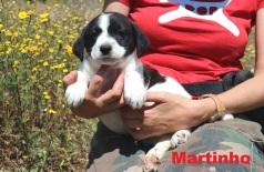 Martinho (4)