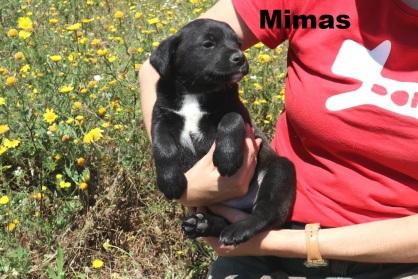 Mimas (4)